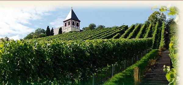 Weingärtner Cleebronn-Güglingen